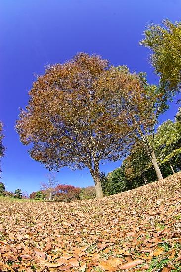 Sagamiharapark07