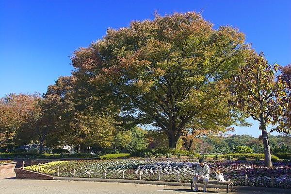 Sagamiharapark02