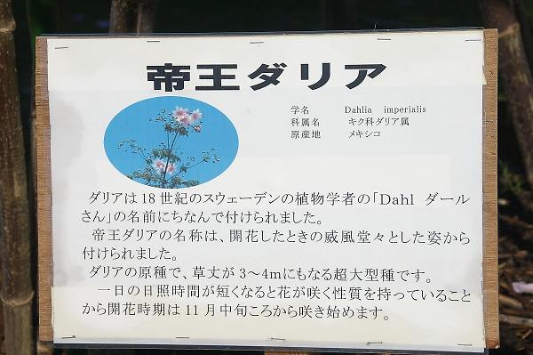 Sagamiharapark28