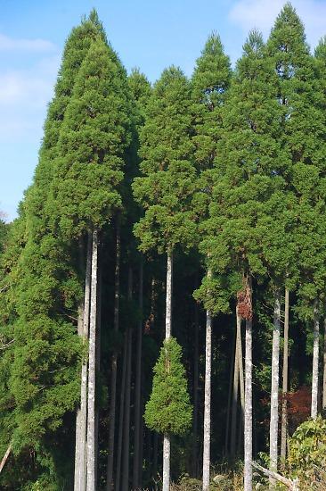 20071123awamatanotaki22_2