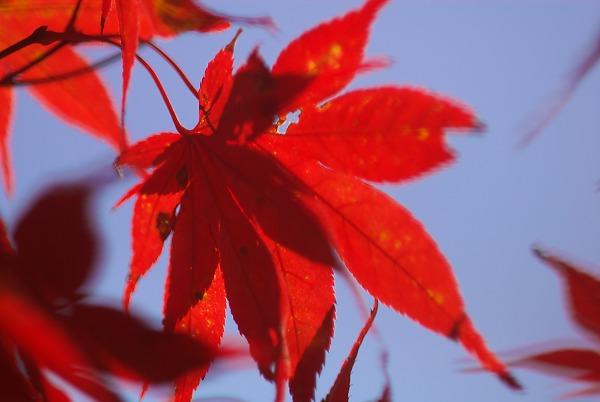 20071124sagamikooku30