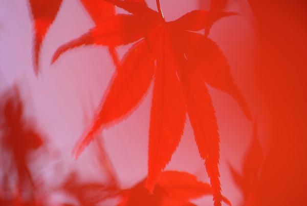 20071124sagamikooku31