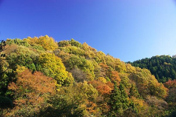 20071124sagamikooku32