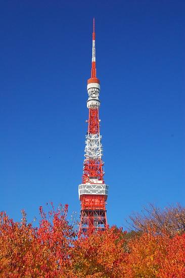 20071206shiba01