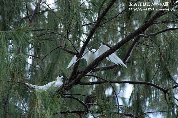 Rota_bird1